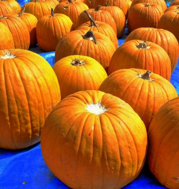 Pumpkin Seed Oil Dosage and Timing