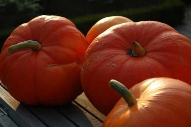 Foods with Beta-carotene