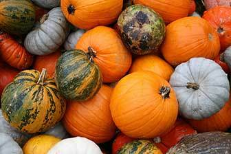 Squash nutrients for face