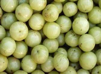 Indian Gooseberry Nutritional Properties