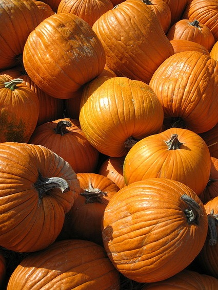 Why is Pumpkin so Good for You